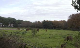Pulizia del bosco di Palo
