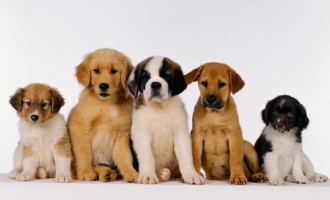 Raid teppistico contro l'area per cani