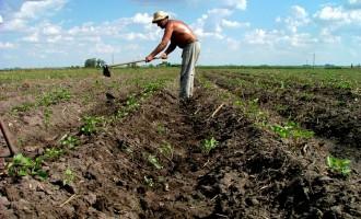 Agricoltura: più' biologico e agriturismi, ripresa per i consumi  nel 2015, aumentano import ed export