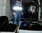 Santa Marinella: la Guardia Costiera evita una nuova razzia di ricci di mare