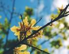 Santa Marinella: la cicogna tradita porta un albero in Comune