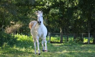 Tolfa, domenica tra cavalli, carnevale e cinema