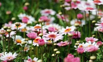 """Asilo nido """"Il Giardino di Ginevra"""": domani l'inaugurazione del giardino e l'intitolazione all'educatrice Floriana Piacenti"""
