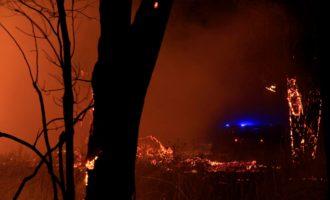 Ordinanza anti incendi a Ladispoli