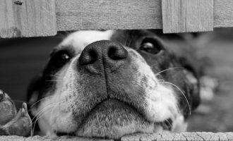 Ladispoli, trovate polpette avvelenate per cani nei giardini centrali