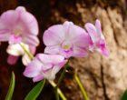 Tolfa, sabato al via mostra fotografica sulle orchidee selvatiche