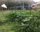 Fiumicino, aree verdi vengano riconvertite in luoghi per giovani