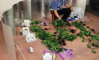 Cerveteri, Carabinieri arrestano 45enne che aveva allestito una serra con 50 piante di marijuana nel suo garage