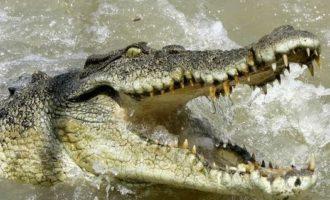 "A Maccarese è psicosi coccodrillo su Facebook nasce anche un gruppo: ""Ce sarete voi un Iguana!"""
