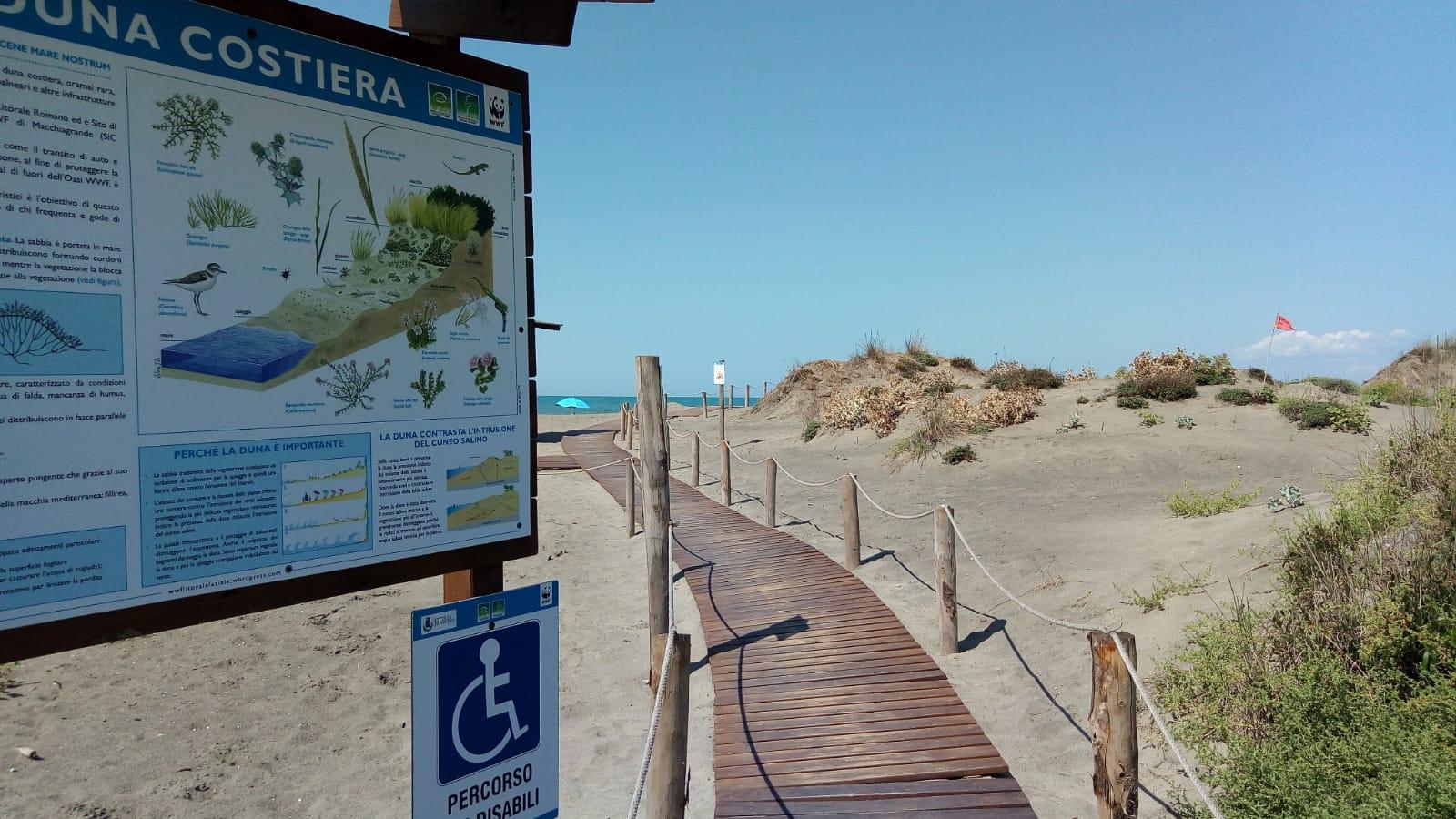 Dune costiere Focene nord, presentati i risultati del progetto realizzato con il WWF Litorale Laziale
