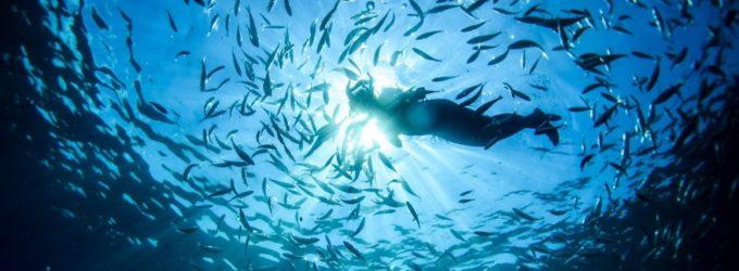 """""""Manteniamolo blu"""": parte un'ulteriore iniziativa della Guardia Costiera laziale per la tutela delle coste e del mare"""