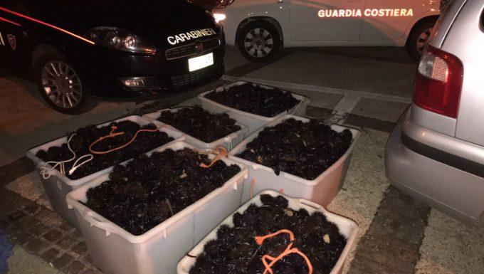 La Guardia Costiera di Civitavecchia sferra un duro colpo alla pesca abusiva sequestrati 6.500 ricci