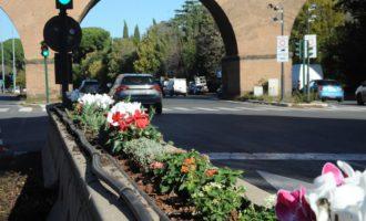 Con 15.500 piante decorative si colora lo spartitraffico centrale della Cristoforo Colombo