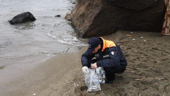 """Monitoraggio della Guardia Costiera dopo lo spiaggiamento di crostacei """"Krill"""" fenomeno episodico ed anomalo"""