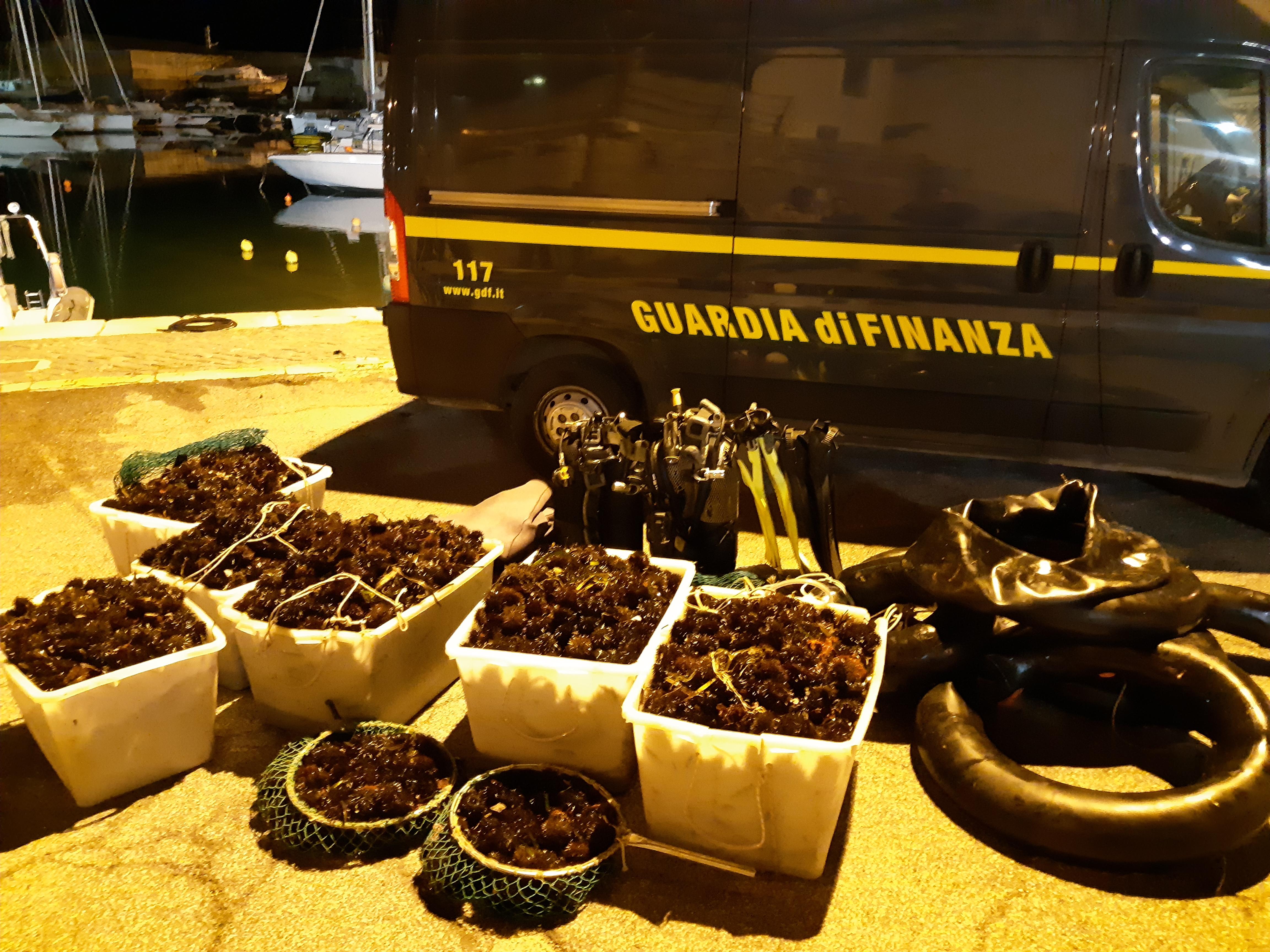 """Operazione """"Riccio3"""" predatori del mare ancora in azione sul litorale di Santa Marinella"""