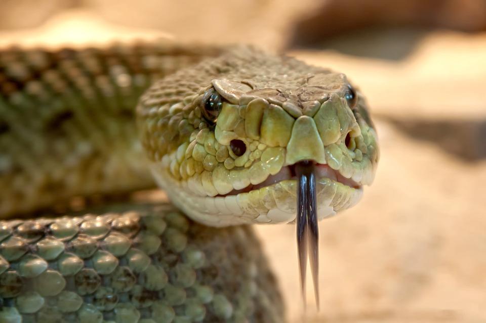 """Divulgazione scientifica per ragazzi: al Granarone """"Rettile Amico"""", come riconoscere i serpenti"""