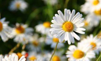 """Nel weekend torna """"Tolfa in Fiore"""" con un'edizione ricca di sorprese"""