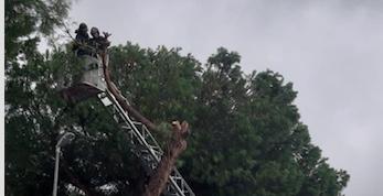 Santa Marinella, albero pericolante intervento dei VVF di Civitavecchia