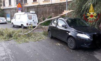 Civitavecchia, forte vento fa cadere un ramo su un'auto