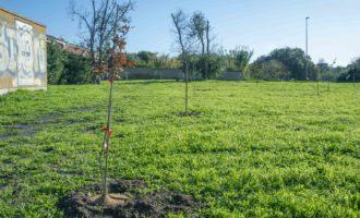 1.800 nuovi alberi nel Comune di Cerveteri grazie all'impegno di E.ON