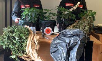 Ladispoli, trovata dai Carabinieri una serra con 12 piante di marijuana