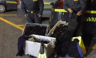 Santa Marinella, il Reparto Operativo Aeronavale della Guardia di Finanza di Civitavecchia sequestra 5.000 ricci di mare