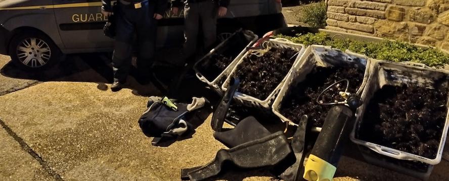 Santa Marinella, la Guardia di Finanza sequestra 6.000 ricci di mare