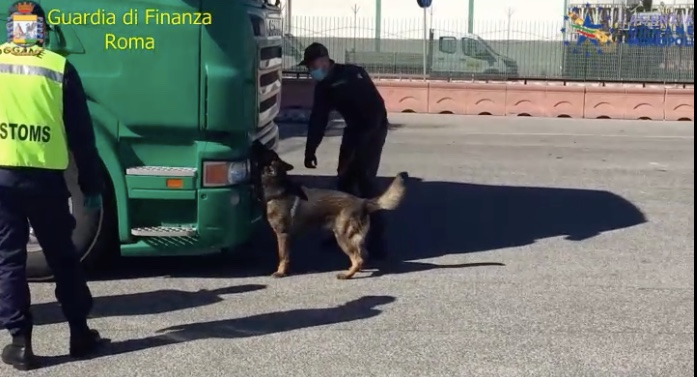 """Porto di Civitavecchia, il cane """"Denim"""" individua 133 buste di cellophane con marijuana"""
