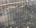 Si schiude il nido della tartaruga marina a Ladispoli Cerveteri